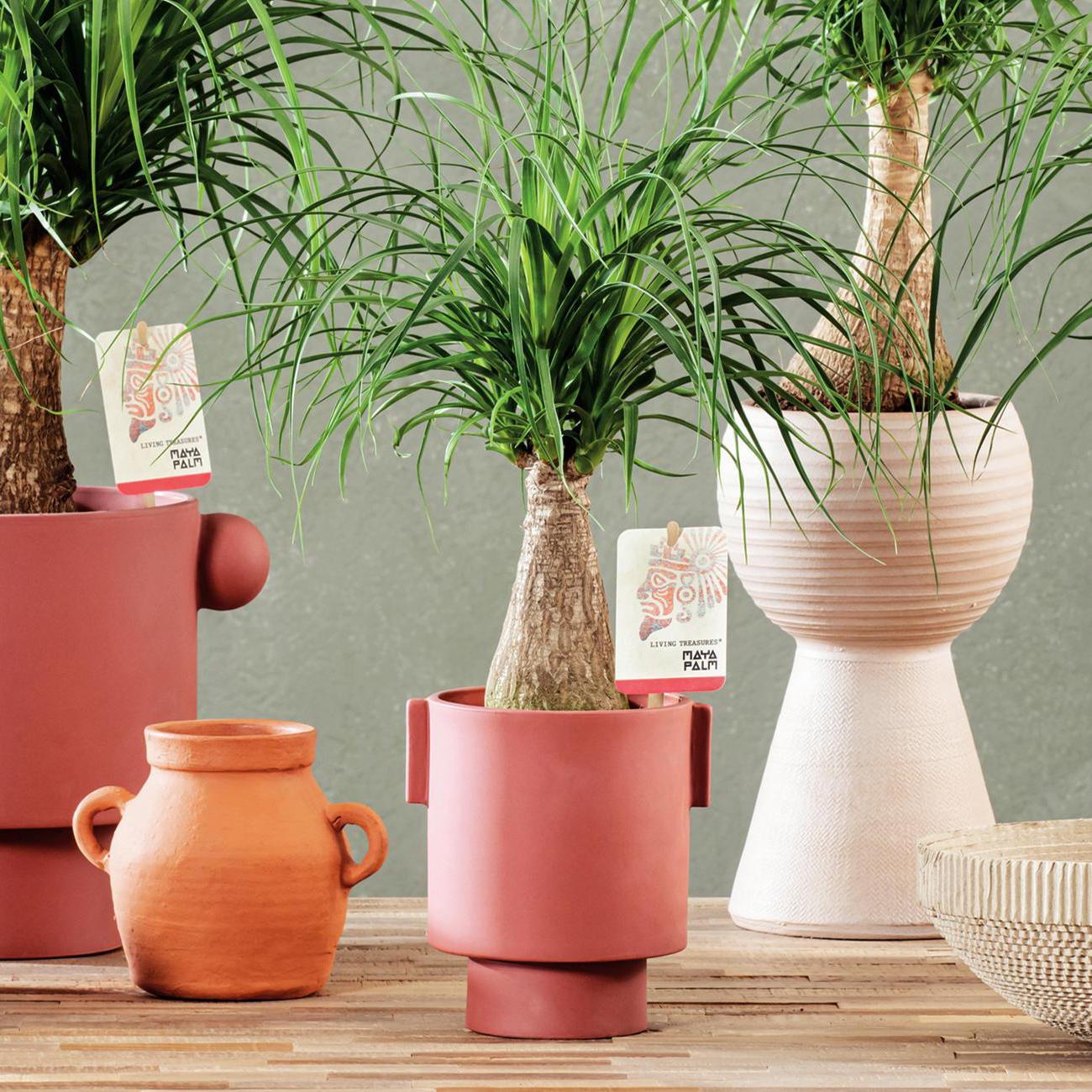 floramedia-custers-plants-living-treasures-portfolio-overzichtspagina
